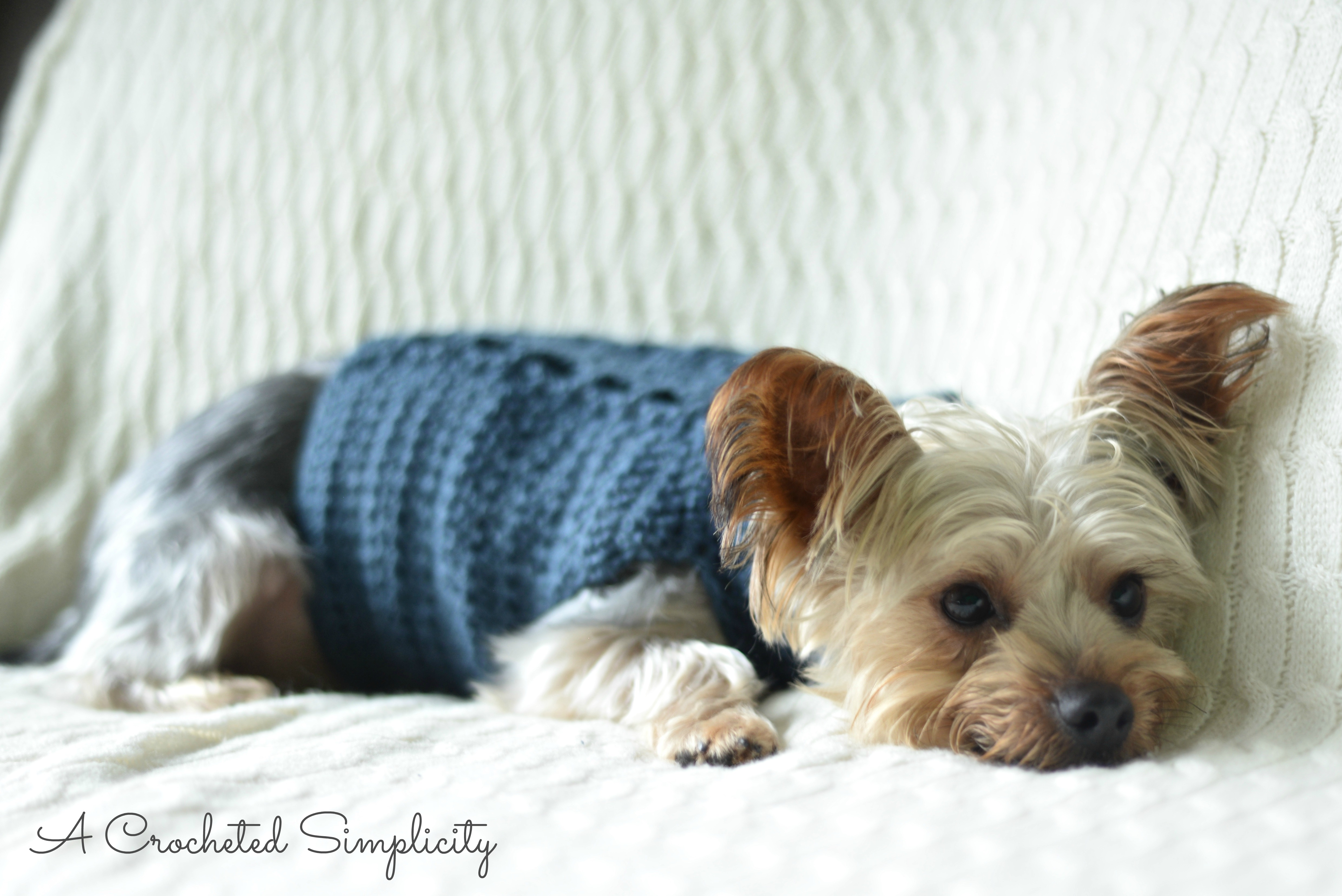 Free Charity Crochet Pattern Cabled Dog Sweater A